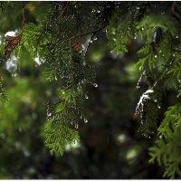 После дождя. :: Saniya Utesheva