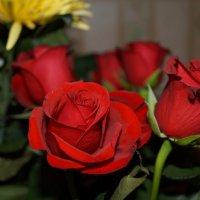 Что может быть приятнее букета цветов :: Мария Афанасьева