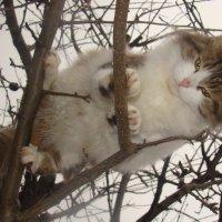 Котик :: Лилия Бобкова