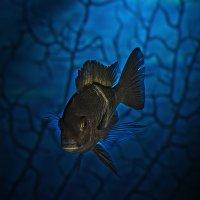 Из морских глубин :: Андрей Качин