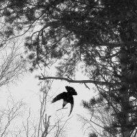 февРаль :: fotovichka репортажный фотохудожник