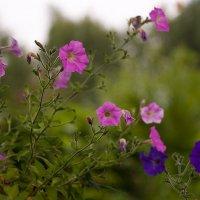 осенние цветы. :: Николай Тренин