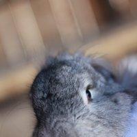 Funny Bunny :: Sh.E.V. n/a