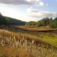 Рыжиковый рай :: Мария Богуславская