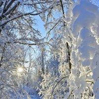 В дебрях дорог питерского Деда Мороза. Подглядел красоту 6 :: Виталий Половинко