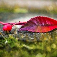 Остатки осени весной..... :: Svetlana Sneg
