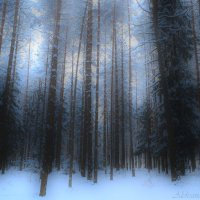 сумеречный лес :: Александра Мустафина