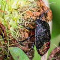 Инсект :: Nn semonov_nn