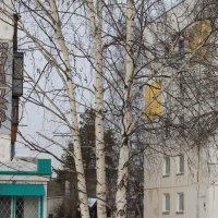 Три сестры. :: Олег Афанасьевич Сергеев