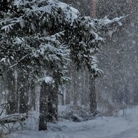 снегопад :: sergej-smv
