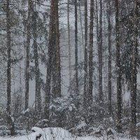 снег падает на снег :: sergej-smv