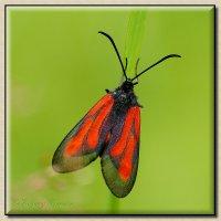 Чёрное и красное :: Evgeny Berezin