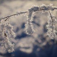 Зимние зарисовки. :: Любовь Анищенко