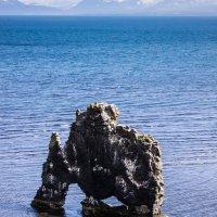 Хвитсеркур (Hvitserkur) - каменный мамонт Исландии :: Вячеслав Ковригин