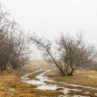 Туманный февраль. :: Людмила Лопатченко
