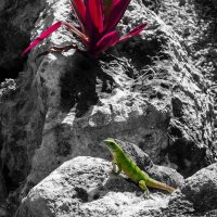 В камнях Мексики :: Elena Anders