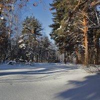 На лесной опушке :: Kassen Kussulbaev