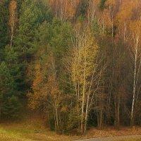 Осень :: Сергей Мышковский