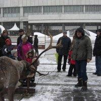 медитация на северного оленя :: Геннадий Тимин