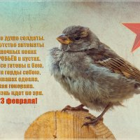 Всех с 23 февраля! :: Андрей Поляков