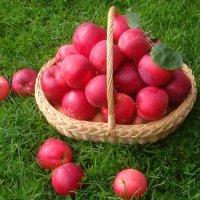 Корзина с яблоками :: Mariya laimite