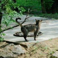 Жил был мартовский кот, он любил антрекот, но колбаской не брезговал чайной... :: Ольга Кривых