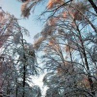 в парке после ледяного дождя :: Елена Познокос