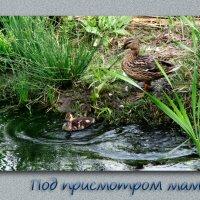 Под присмотром :: Владимир Кроливец
