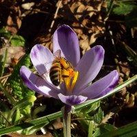 весна :: Андрей F