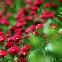 Никитский сад :: Аня Смирнова