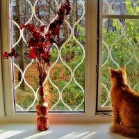 Сидит кошка на окошке Изучает Божий свет Эти птички, эти мошки! Просто сил кошачьих нет! :: Ольга Кривых