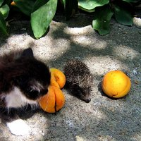 любовь к трем абрикосам :: Александр Корчемный