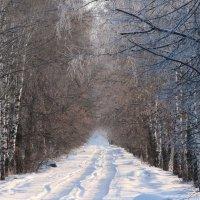 Дорога в деревню :: Николай Кабин