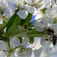 воспоминание о весне :: Игорь Чубаров