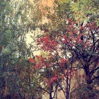 Осень :: Наталия Руколеева