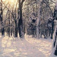 Среди заснеженных деревьев :: Сергей Тарабара