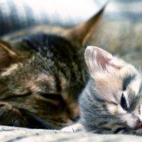 Мама и  дочка :: Юлия Филина