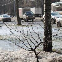 Городская весна :: Владимир  Зотов