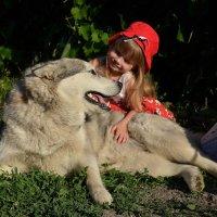 Красная шапочка и добрый серый волк :: Катерина Терновая