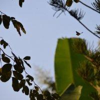 Полет бабочки :: Дарья Лучихина