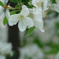 Весна. :: Владимир Гилясев