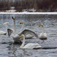 Зимовка на Алтае :: Ульяна Сафронова