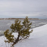 серый февраль :: Дамир Белоколенко