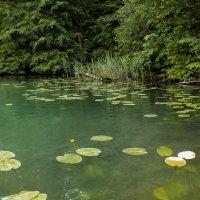 Озеро :: Evgenij Schleinikov