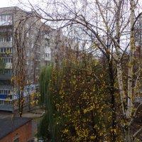 Осень... (3) :: Игорь Липинский