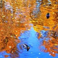 Осень :: Дмитрий Сажин