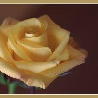 Rose. :: Gene Brumer
