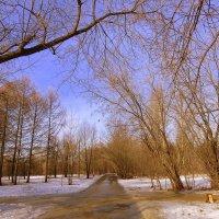 Весна идет :: Наталья Лакомова