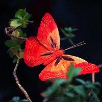 бабочка :: Марина Ивонина