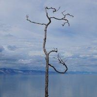 Одна на ветру... :: Татьяна Алферова
